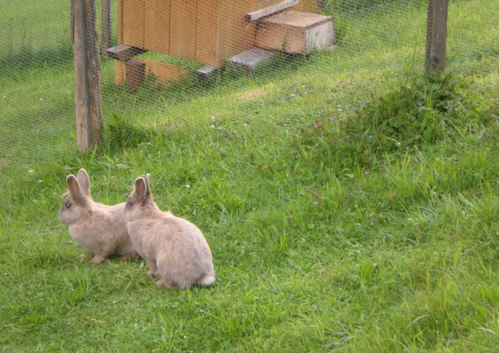 Außenhaltung von Kaninchen