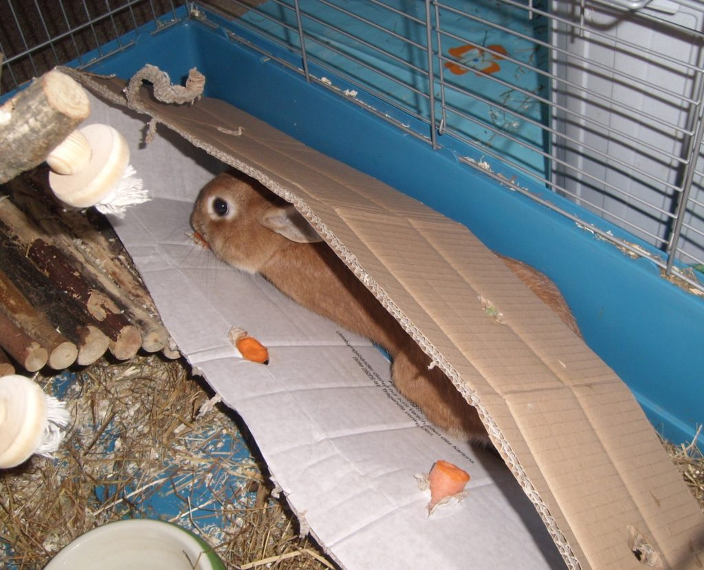 Beschäftingung der Kaninchen