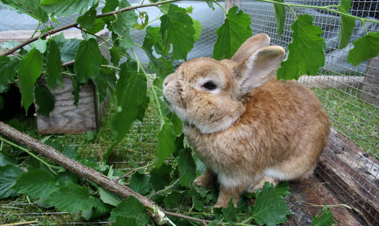 das kaninchen beschäftigen