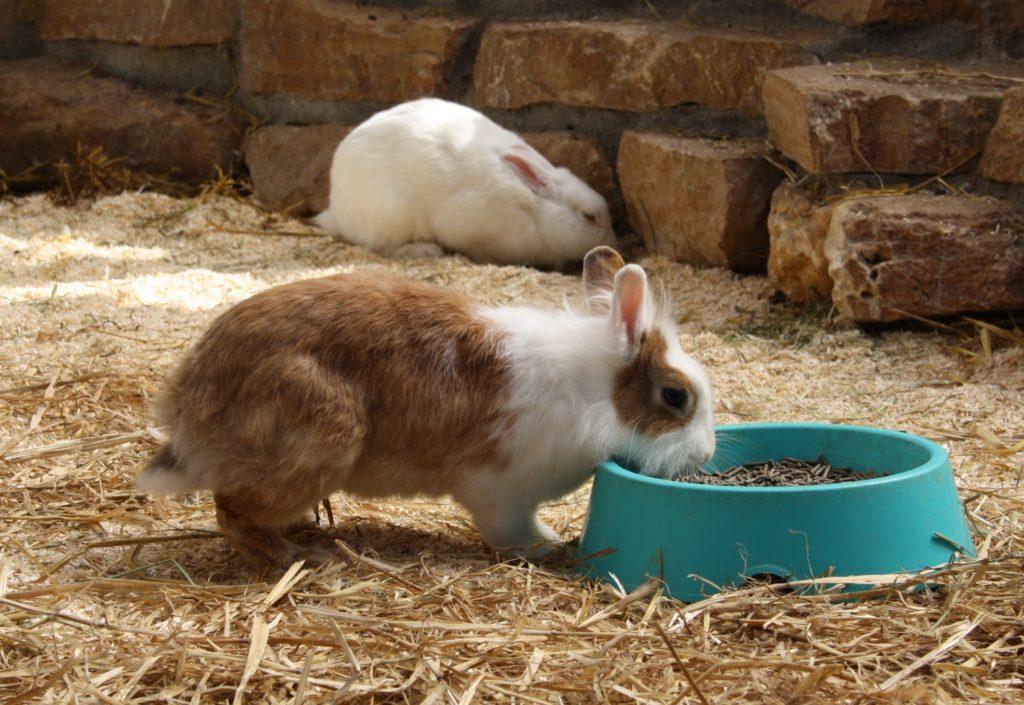 Die Futterstelle im Kaninchengehege