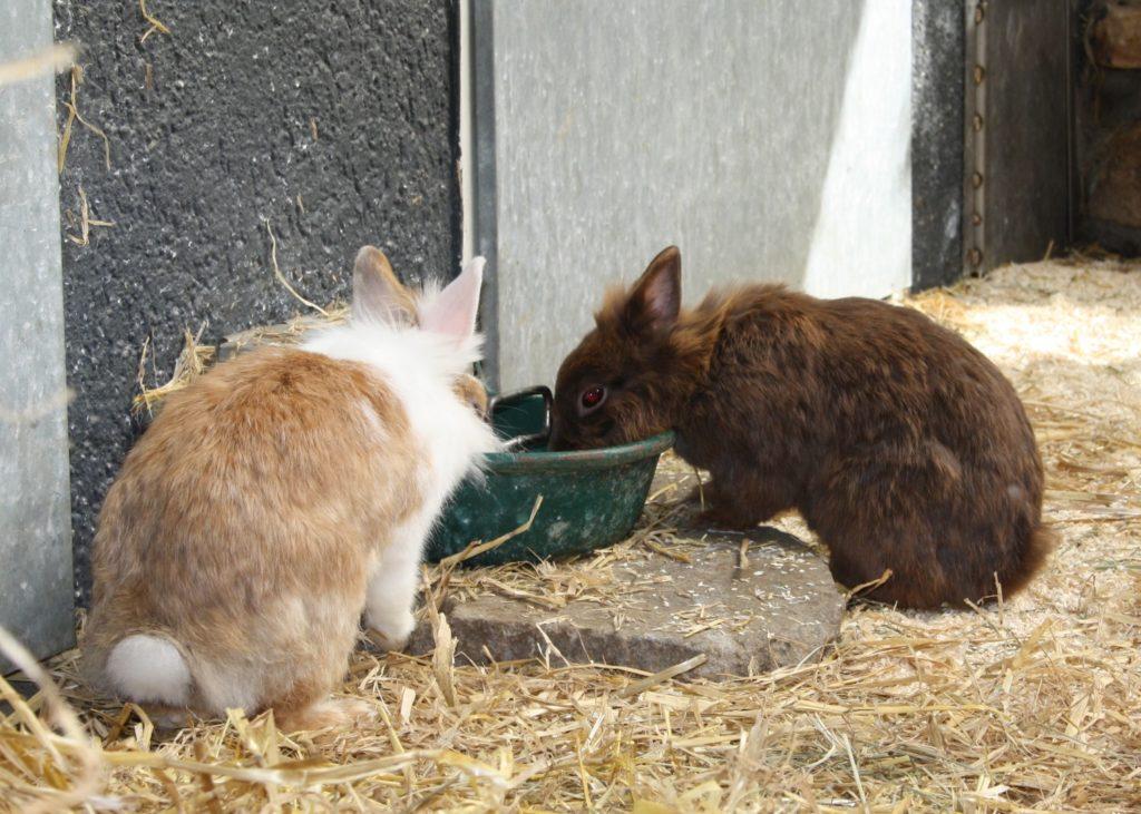 Gesunde Kaninchen