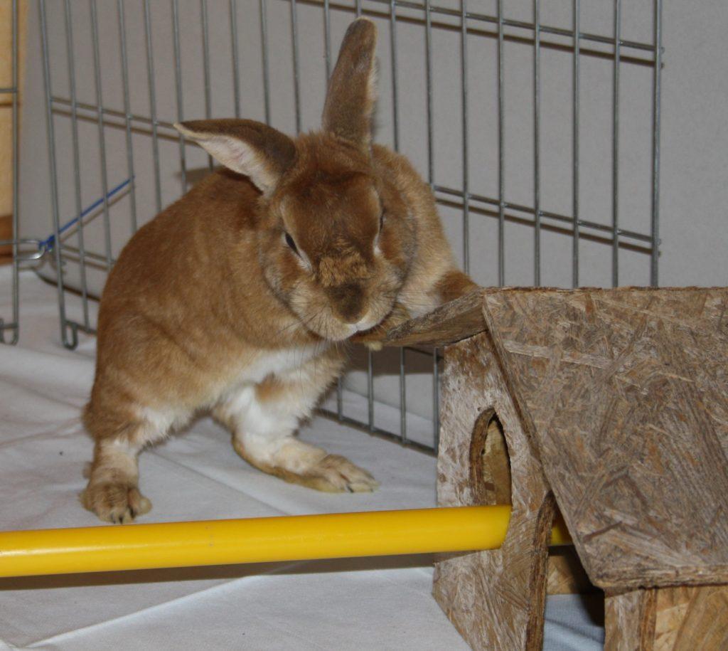 Spielen und Beschäftigung der Kaninchen