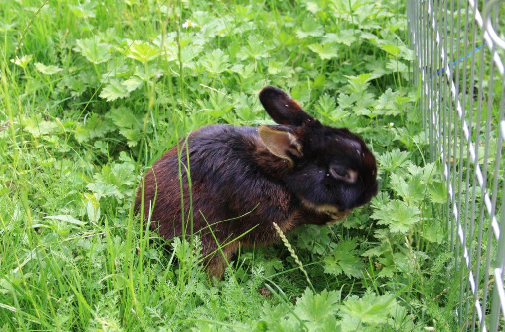 Kaninchen im hohen Gras
