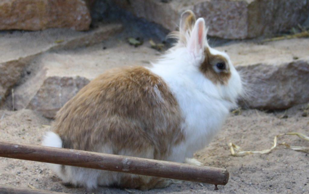 Kaninchen mit langem Fell