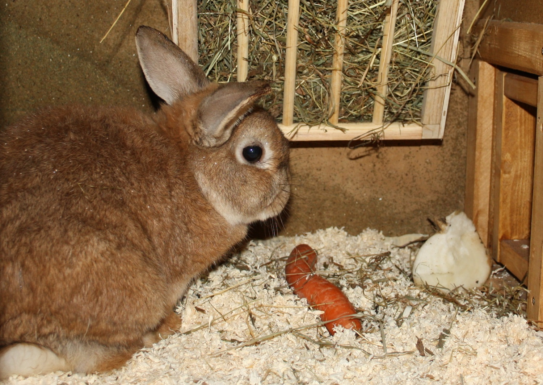 Geeignetes Futter für das Kaninchen