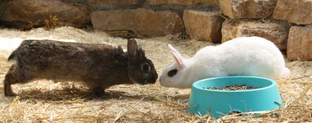 Kommunikation zwischen Kaninchen