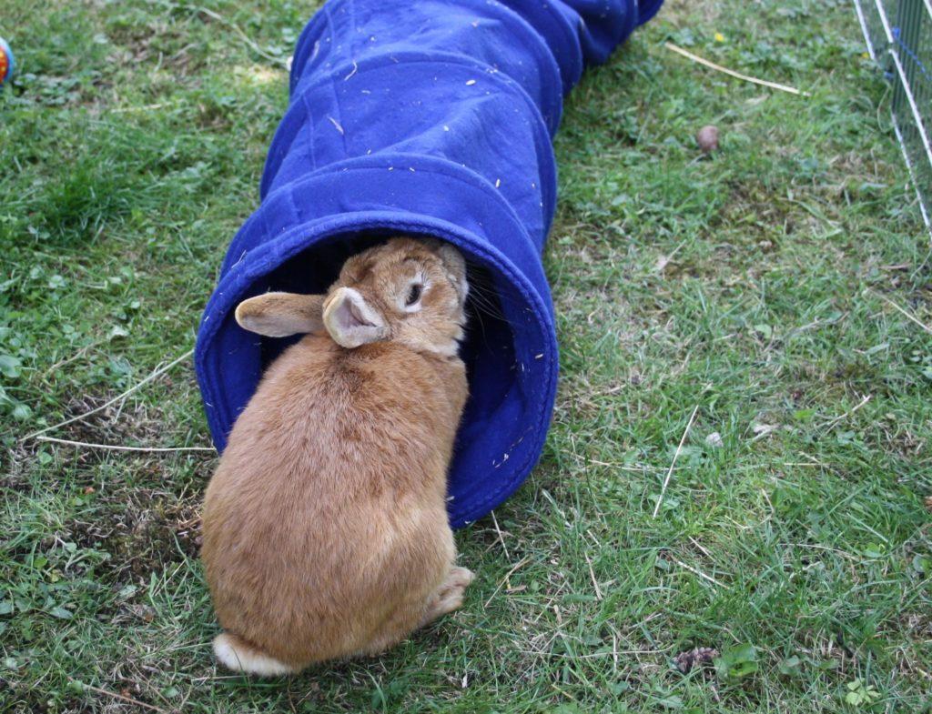Kaninchentunnel und sonstiges Beschäftigungsmaterial
