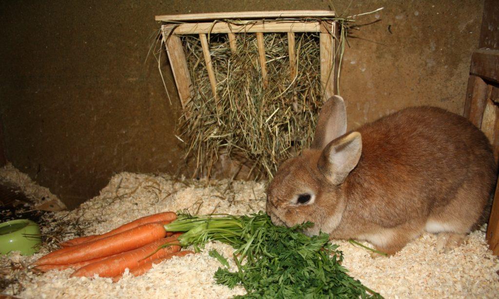 Karotten im Winter