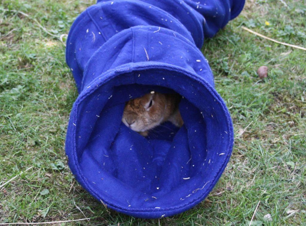 Tunnel zum erkunden für das Kaninchen
