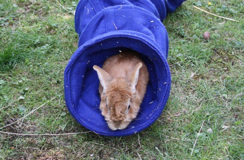 Kaninchen im Tunnel