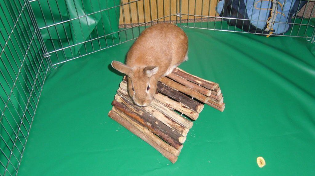 Kaninchen in der Wonung halten