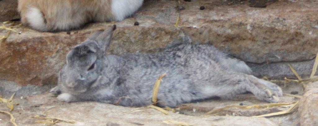 Körpersprache - Entspanntes Kaninchen