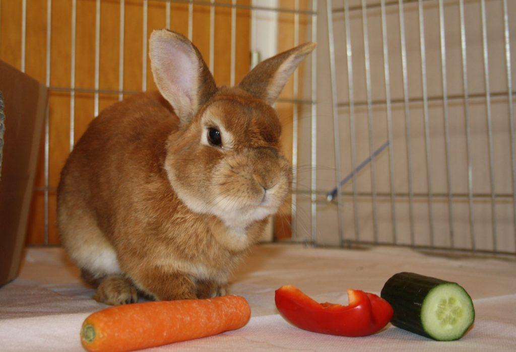 Futterliste für Kaninchen