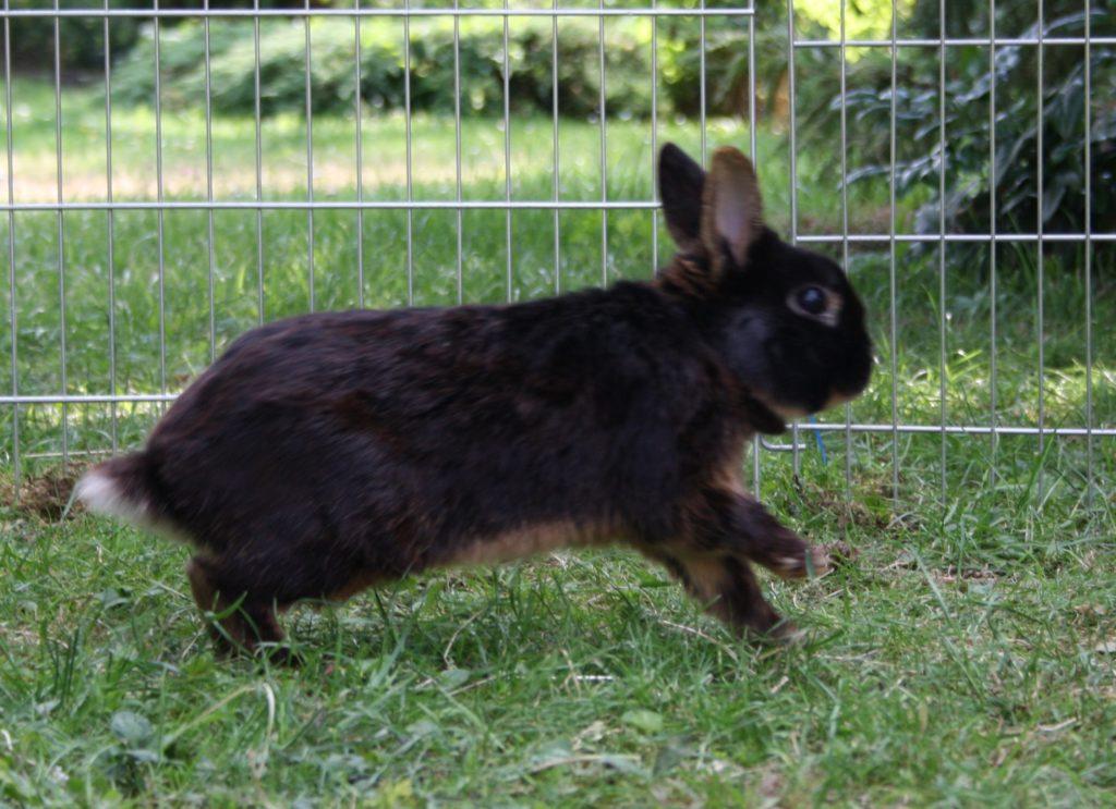 Übermütiges Kaninchen