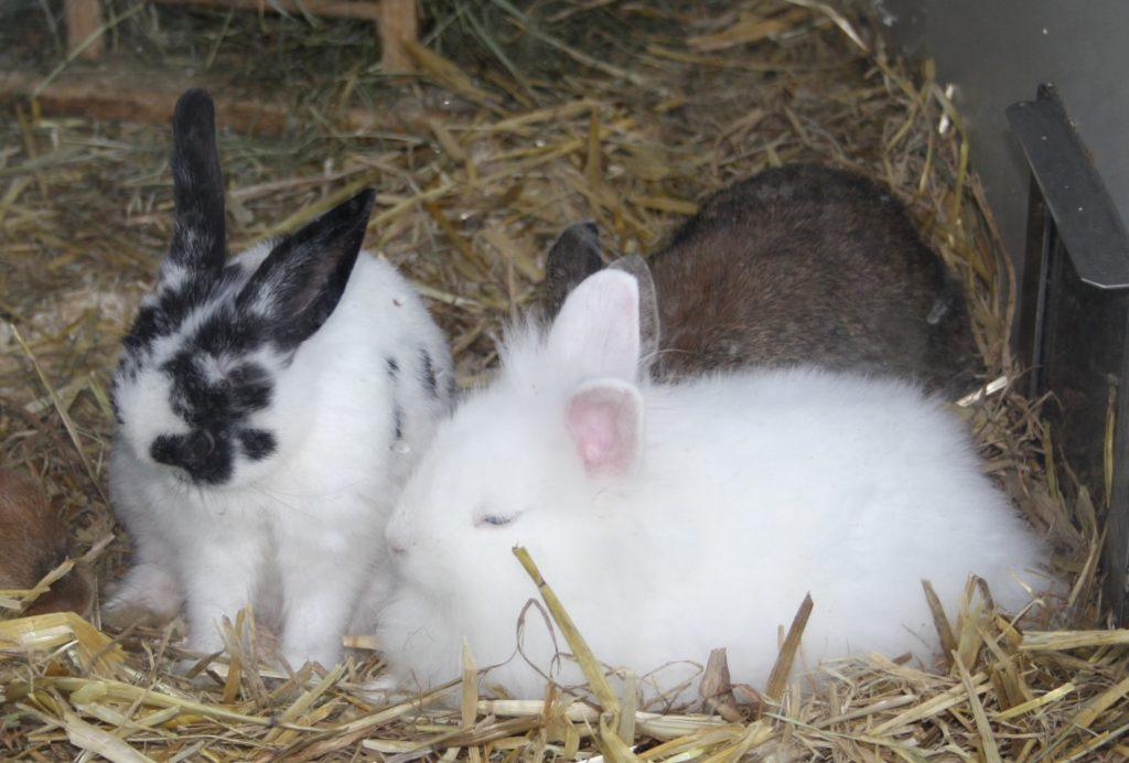 Nachwuchs der Kaninchen