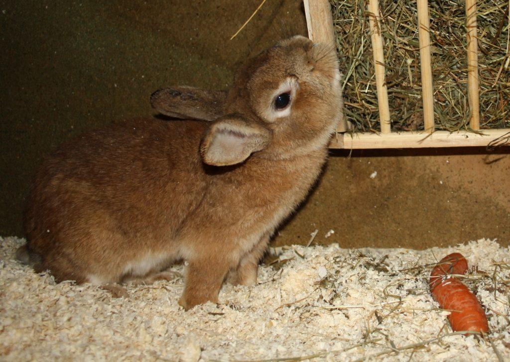 Verhalten und Kommunikation bei Kaninchen