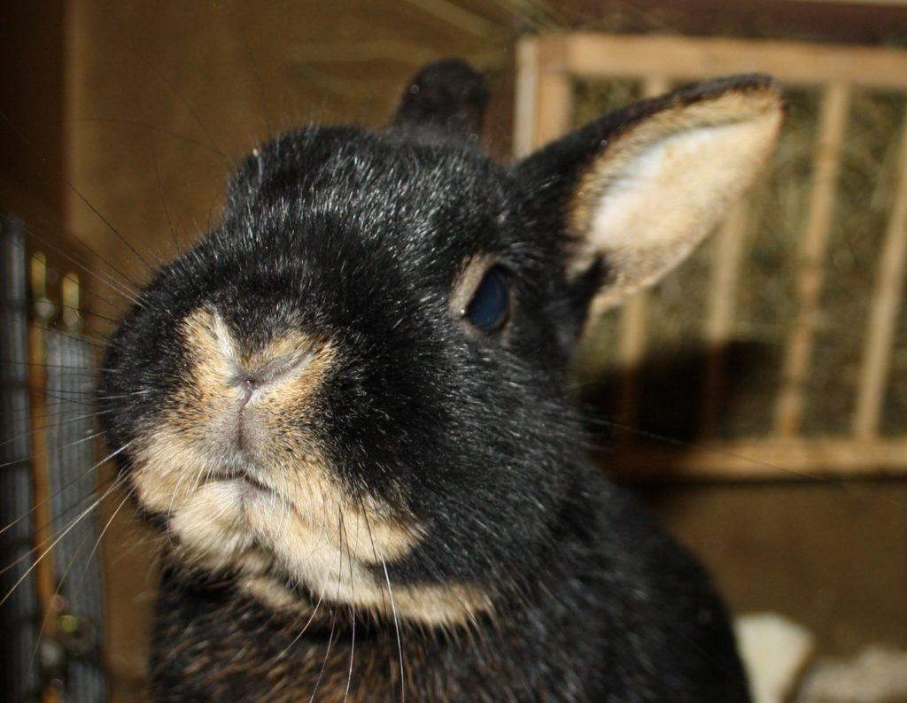 Geruchssinn der Kaninchen