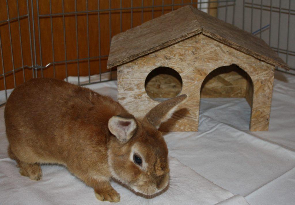 Schlafhaus für Kaninchen