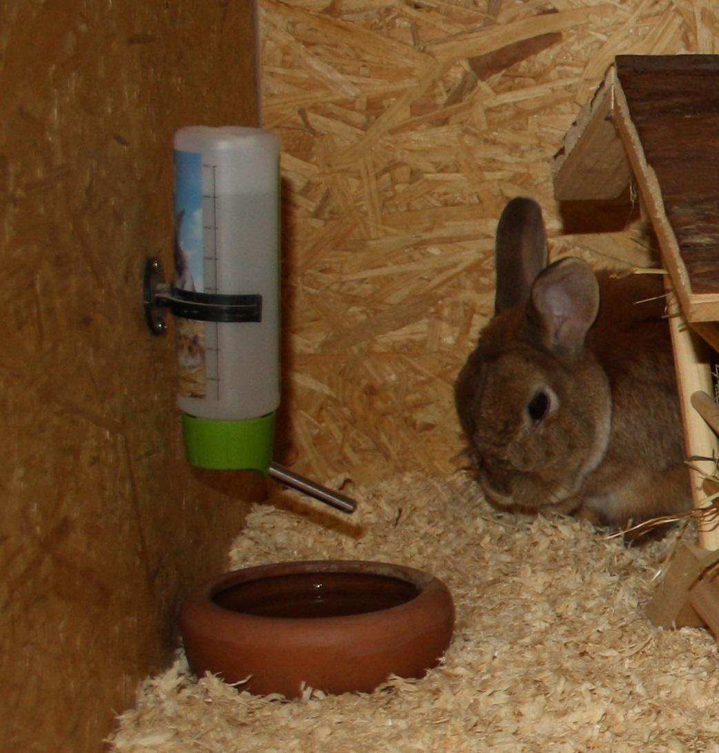 Die optimale Tränke für dein Kaninchen • Auf dies musst du achten!