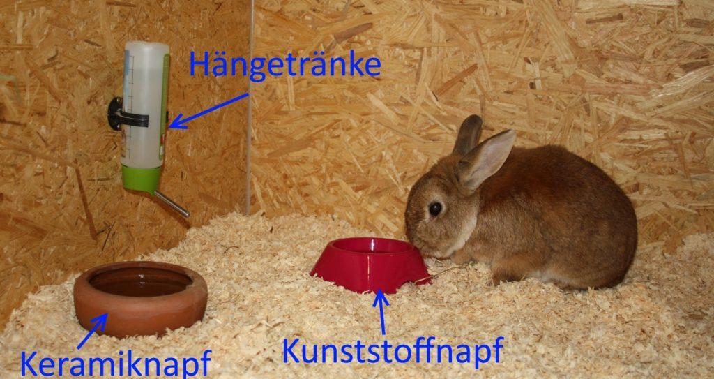 Tränken für Kaninchen - Arten