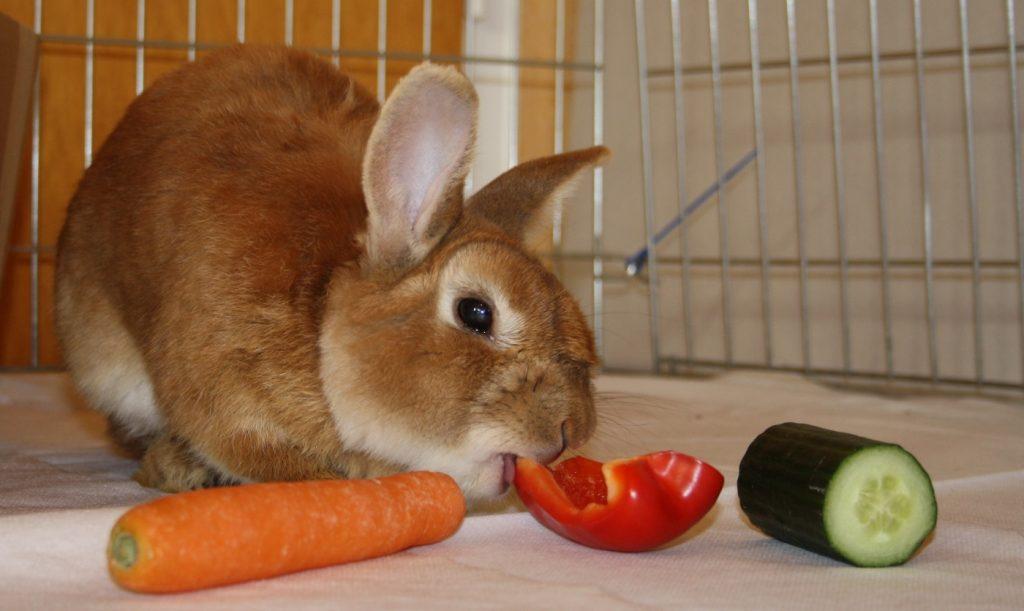 Gemüse als Kaninchenfutter
