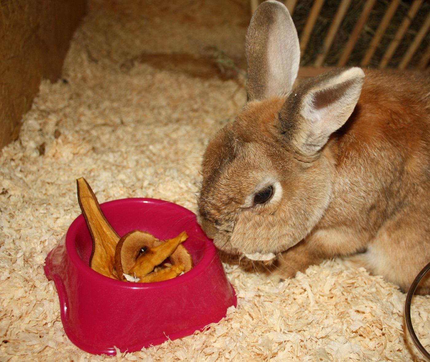winterfutter f r kaninchen es muss nicht immer nur heu sein. Black Bedroom Furniture Sets. Home Design Ideas