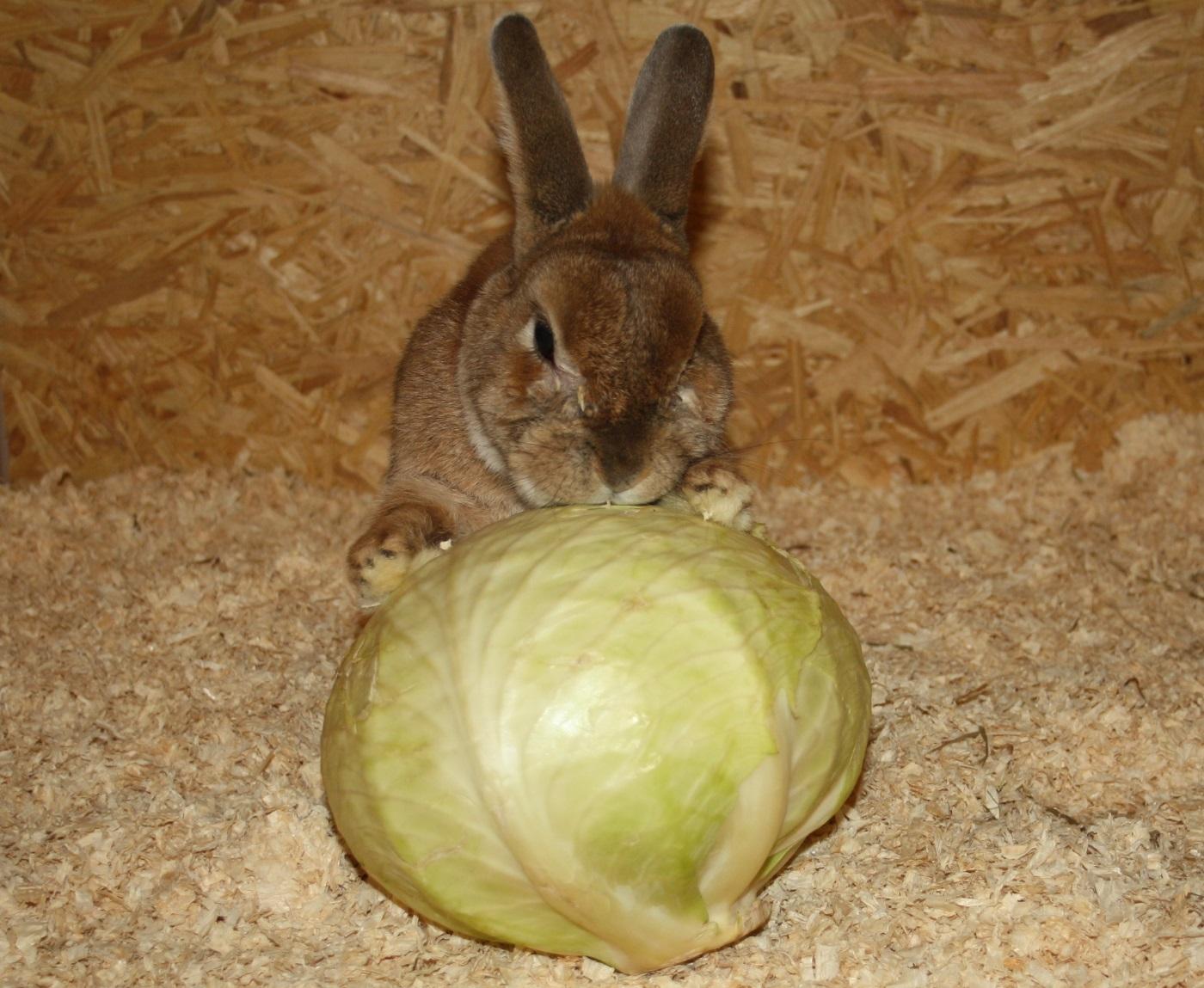 dürfen kaninchen zucchini fressen