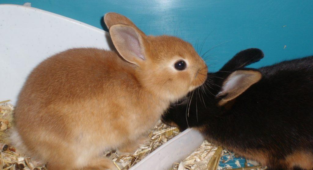 Vom Kaninchenbaby zum Senior