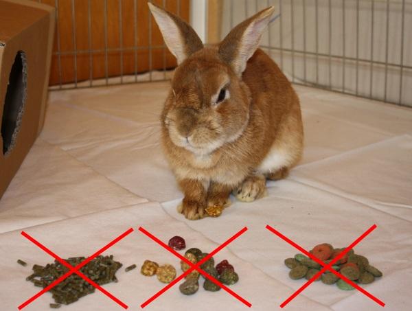 Kein Trockenfutter für Kaninchen