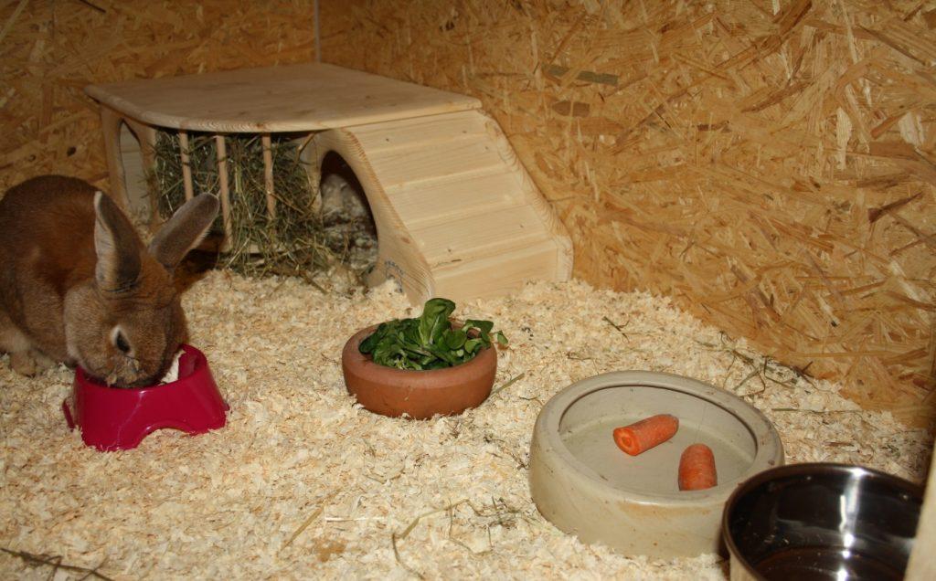 Den kaninchenstall einrichten dieses zubeh r ben tigt man unbedingt - Kaninchenstall einrichten ...