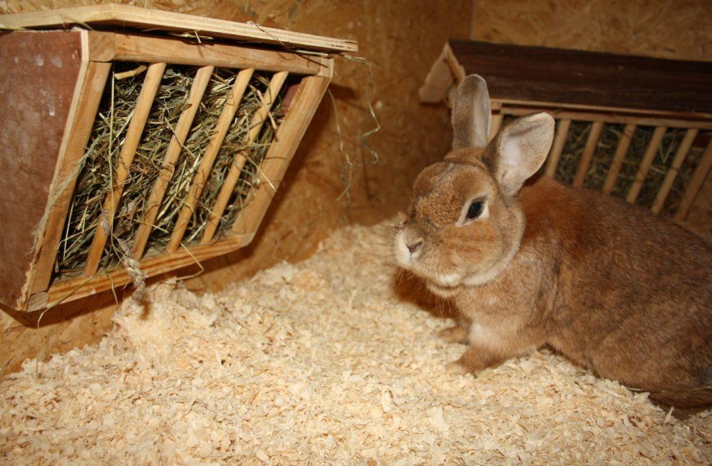 Holzspäne als Kaninchenstall Einstreu