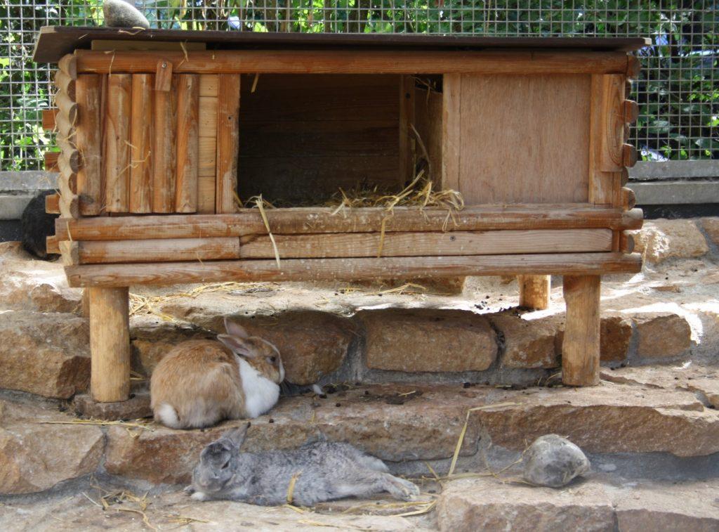 Kaninchenstall f r mehrere kaninchen so sollte er aussehen - Kaninchenstall einrichten ...