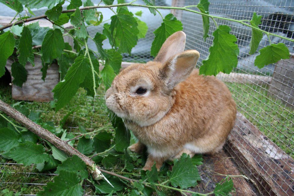 Festes Kaninchengehege mit Ästen und Zweigen