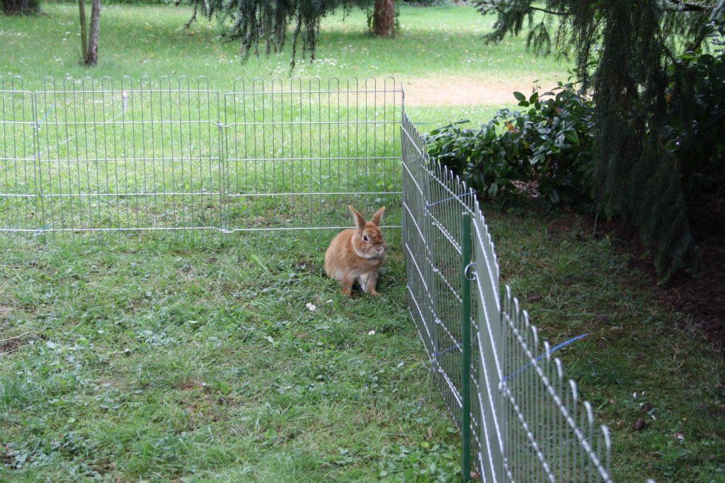 Zaun Kaninchenauslauf So Baut Man Fachmannisch Einen Auslauf