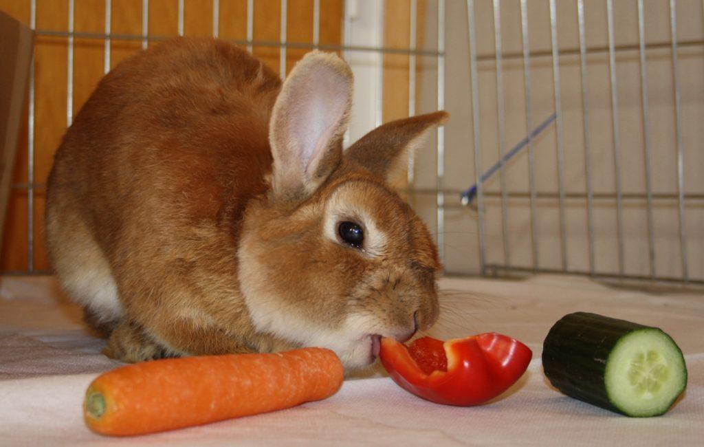 Artgerechtes Kaninchenfutter aus Gemüse