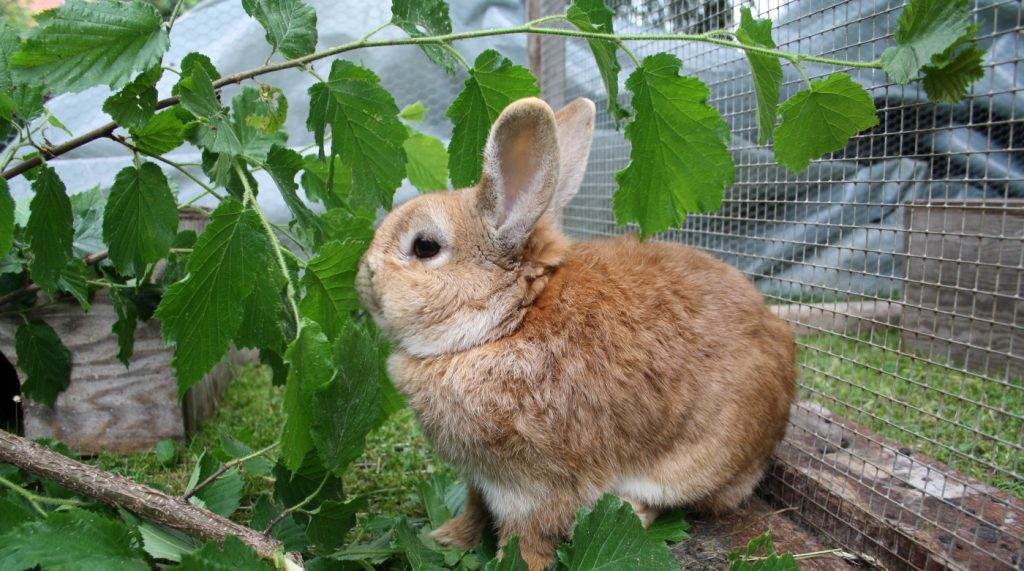 Blätter für Kaninchen