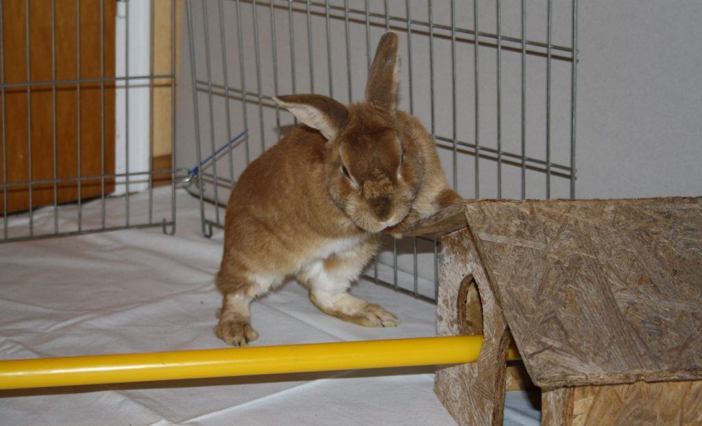 Kaninchen brauch Bewegung