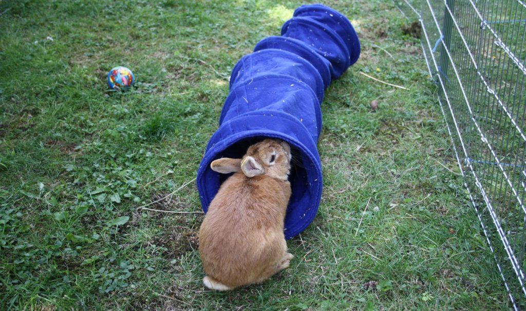 Kaninchentunnel als Spielzeug