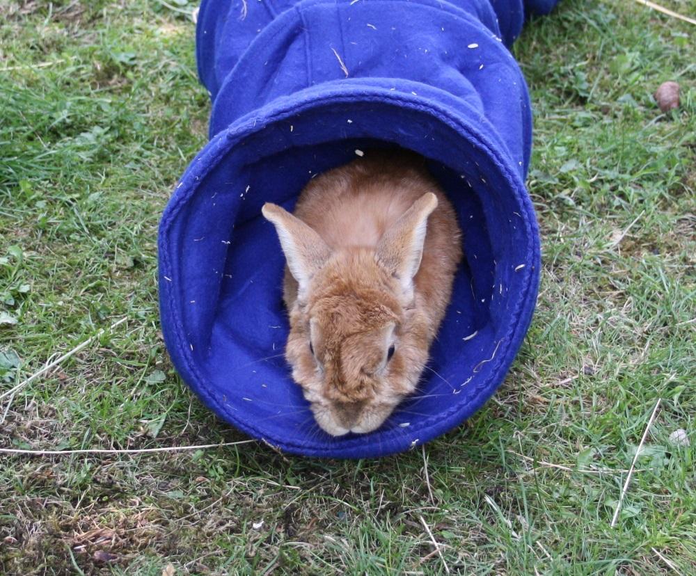 Kaninchen Putzt Sich Ständig