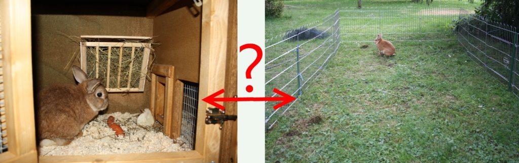 Wieviel Platz brauchen Kaninchen?