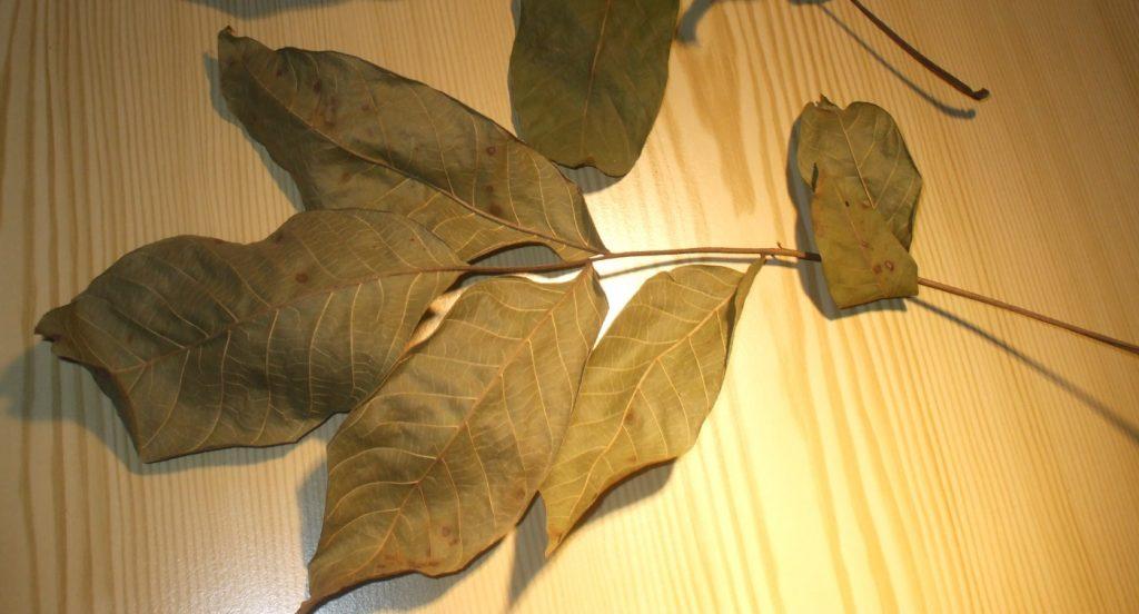 Walnussblätter getrocknet