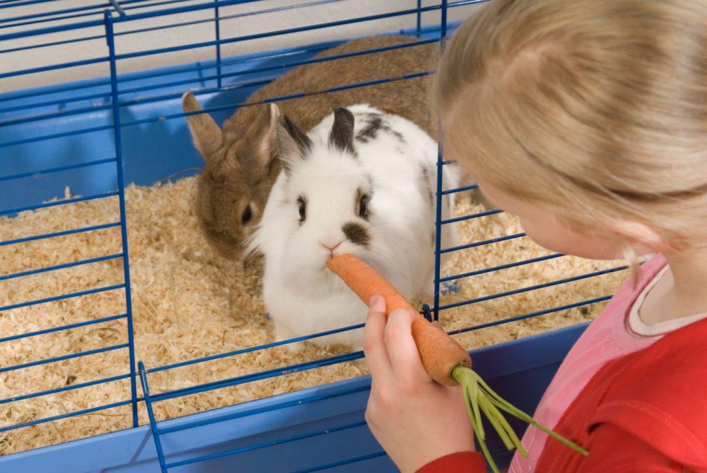 Kaninchenkäfig für Innen - Kaninchenhaltung in der Wohnung