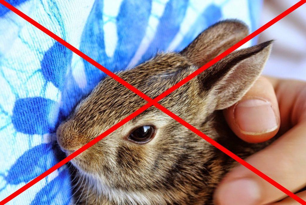 Kaninchen nicht auf den Arm nehmen