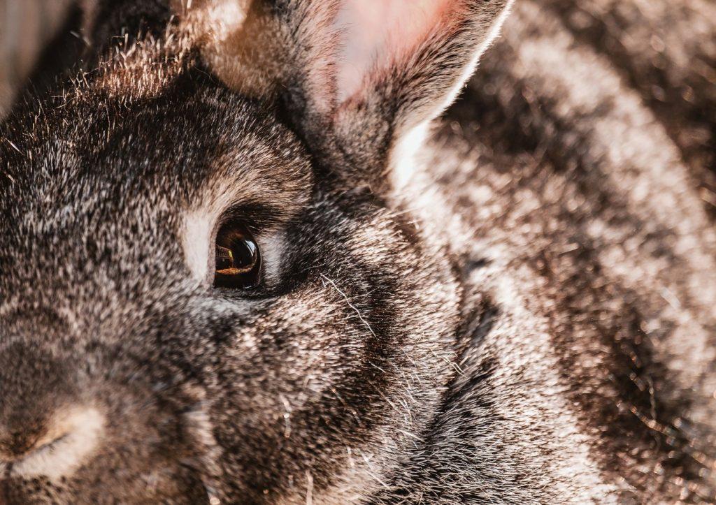 Kaninchen tränen Augen