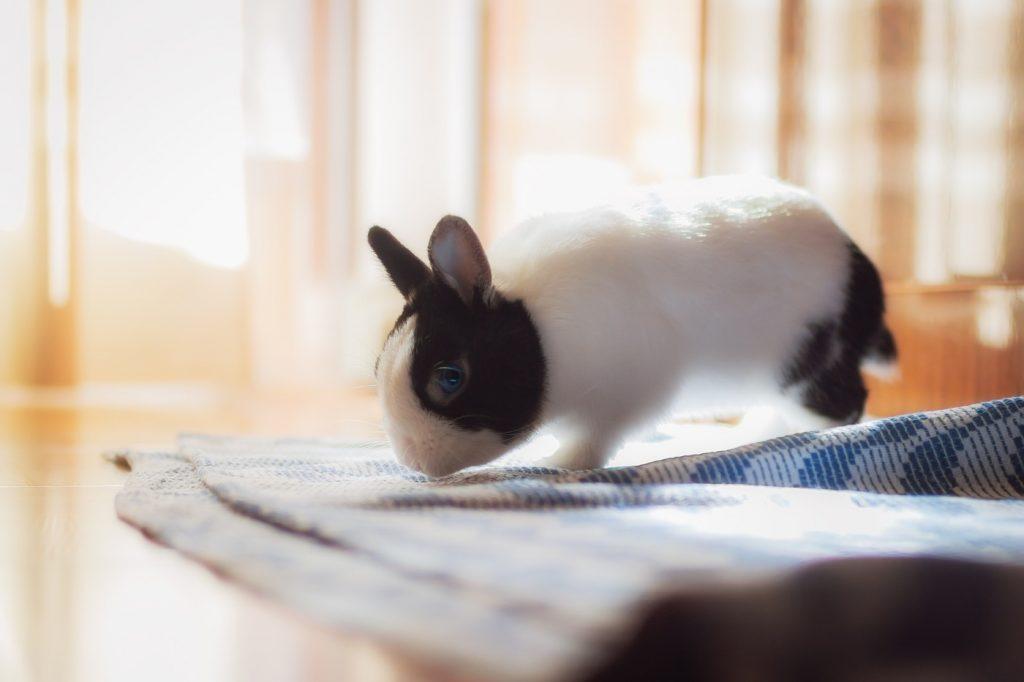 Kaninchen auf Augenhöhe