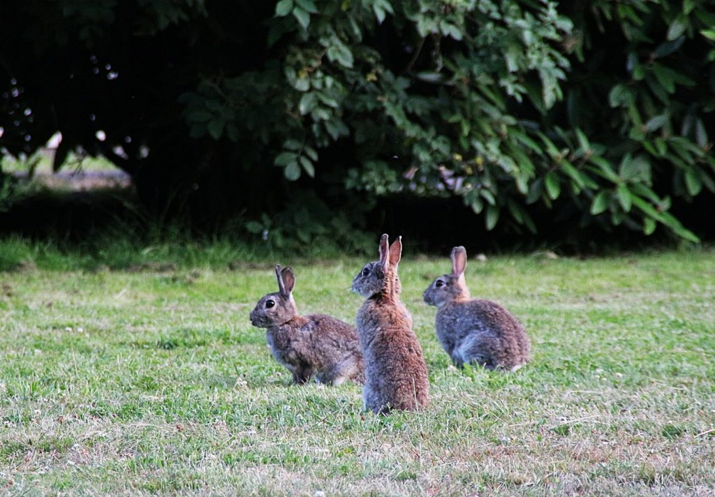 Kaninchen errichten zusammen den Kaninchenbau