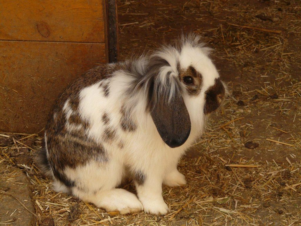 Kaninchen hat Durchfall