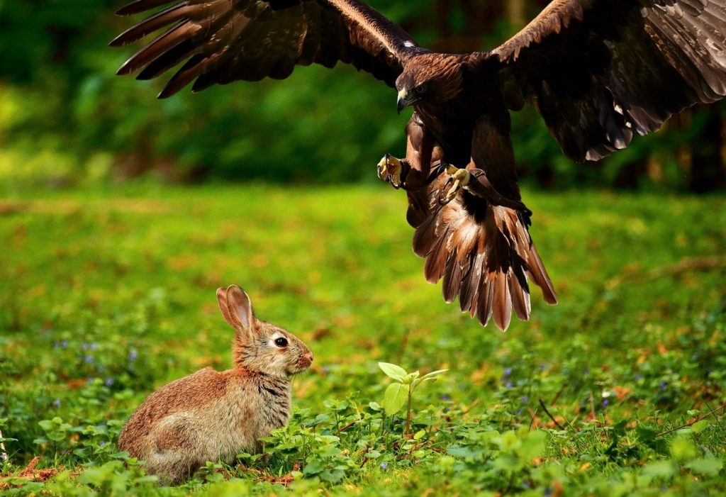 Fressfeinde der Kaninchen