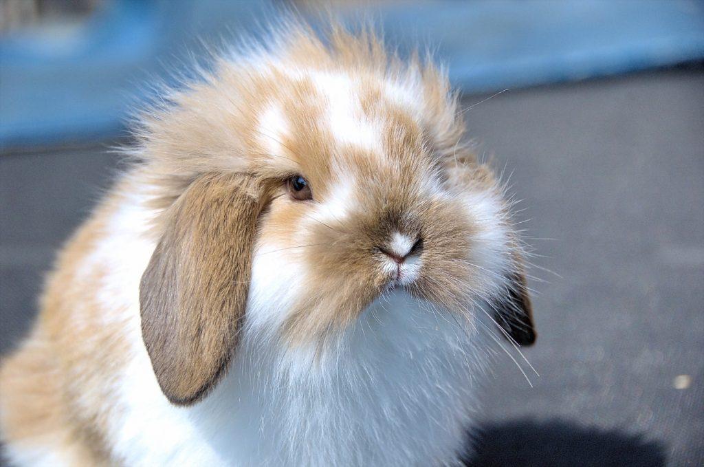 Kaninchen im Kinderzimmer