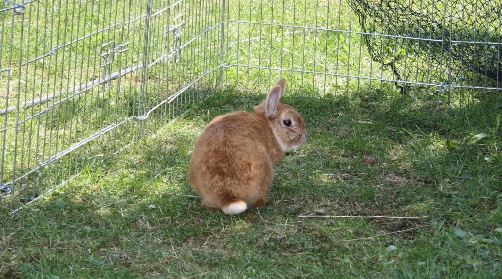 Vitamin D - Kaninchen in der Sonne